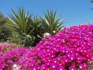 Flowershower Quinta Al Gharb Algarve Portugal