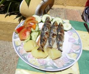 Sardines Ingrina Zavial Quinta Al Gharb